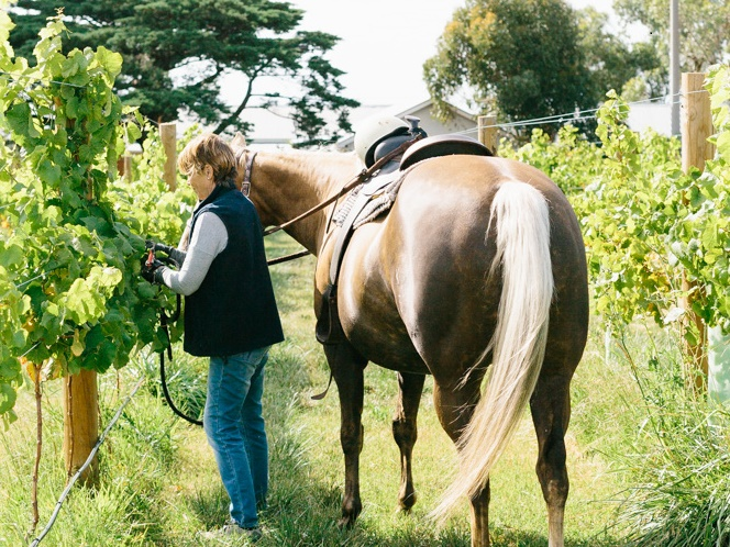 Kate and Honey the horse - photo courtesy of Kiltynane Wines