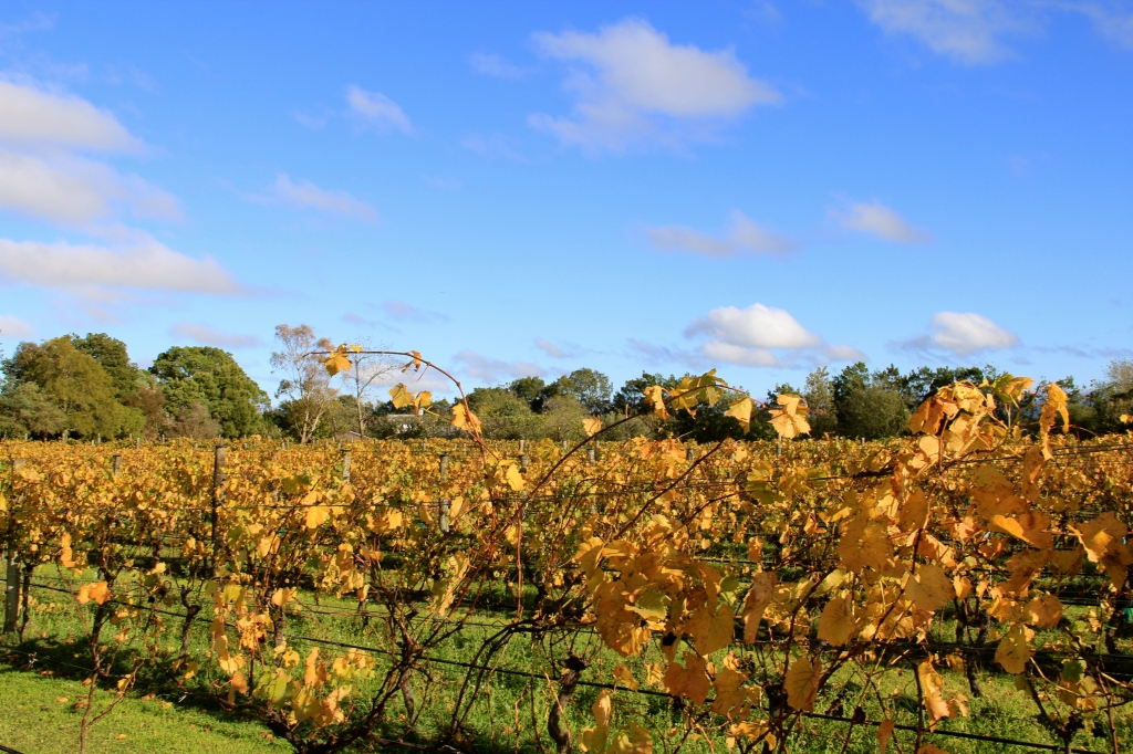 Ata Rangi in Autumn - photo by The Wine Idealist
